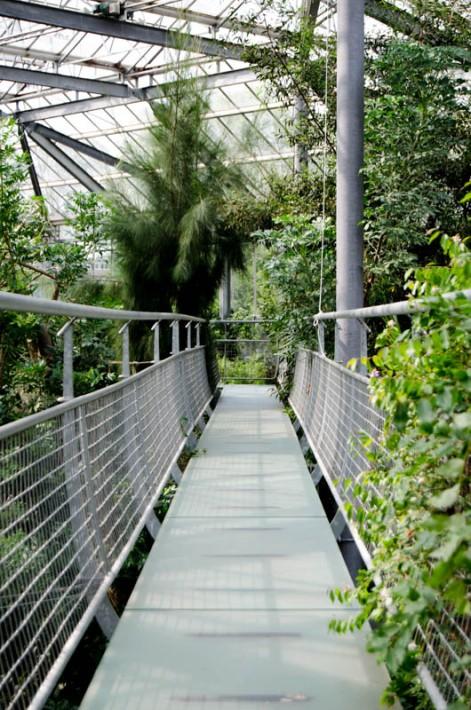 Hortus Botanicus Amsterdam-13
