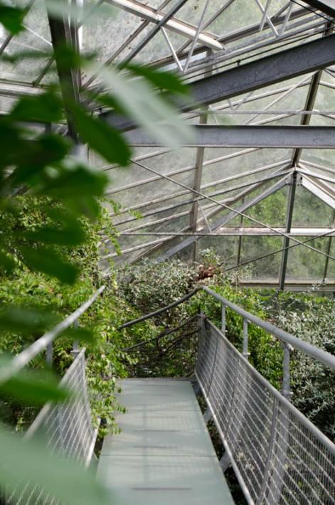 Hortus Botanicus Amsterdam-14