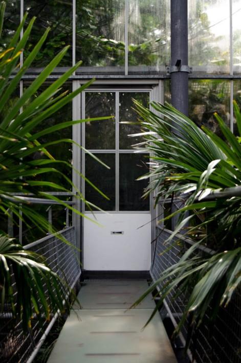 Hortus Botanicus Amsterdam-15
