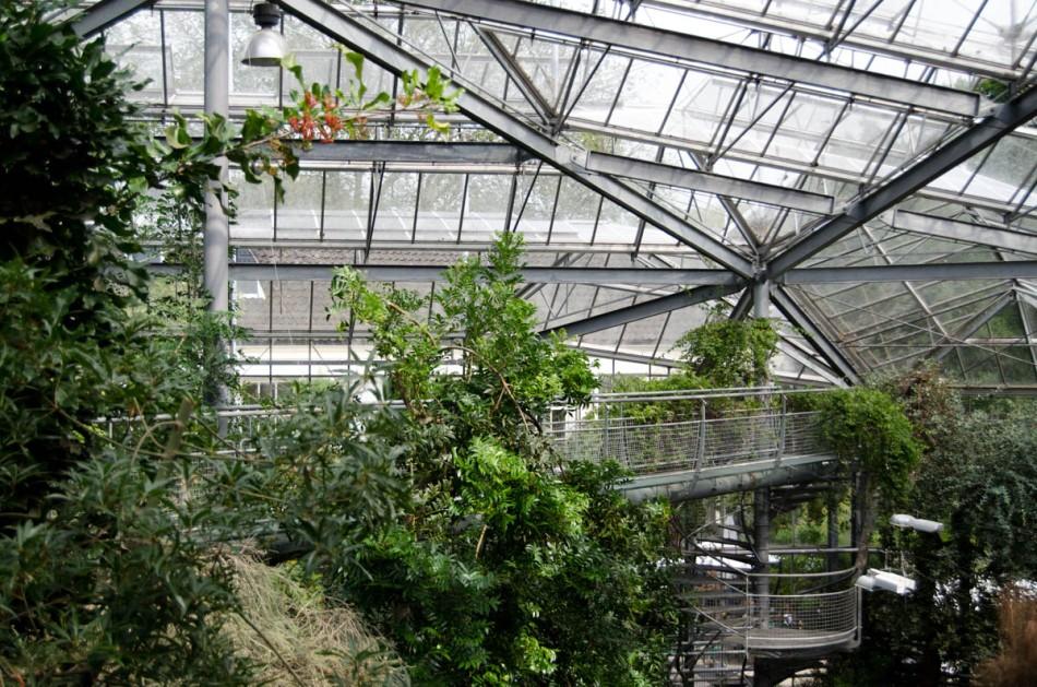 Hortus Botanicus Amsterdam-16