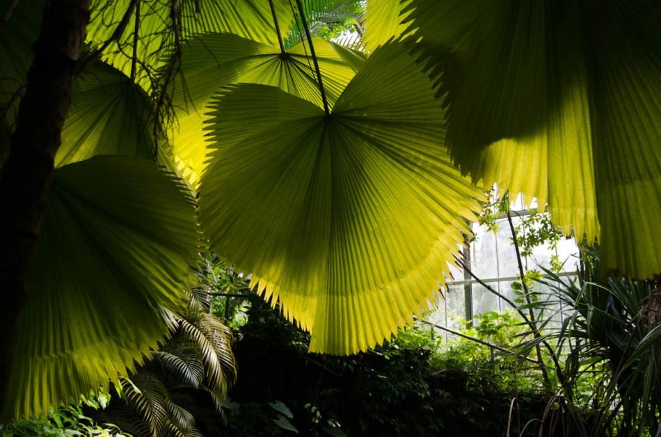 Hortus Botanicus Amsterdam-4