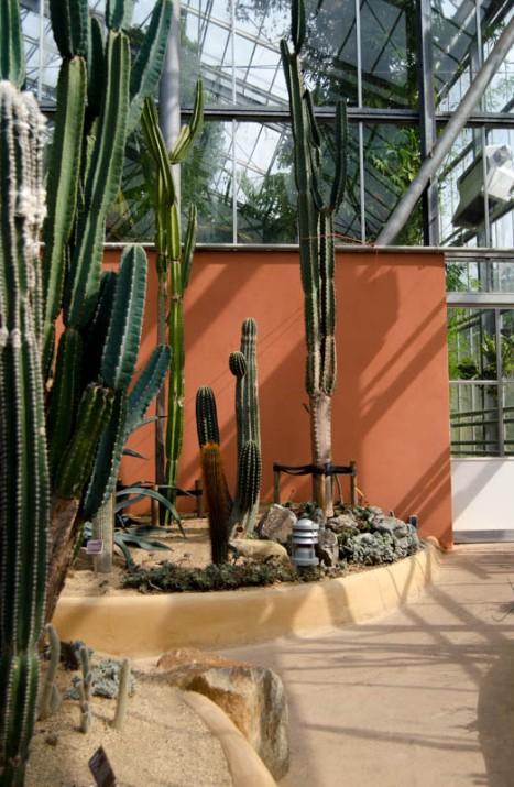 Hortus Botanicus Amsterdam-5