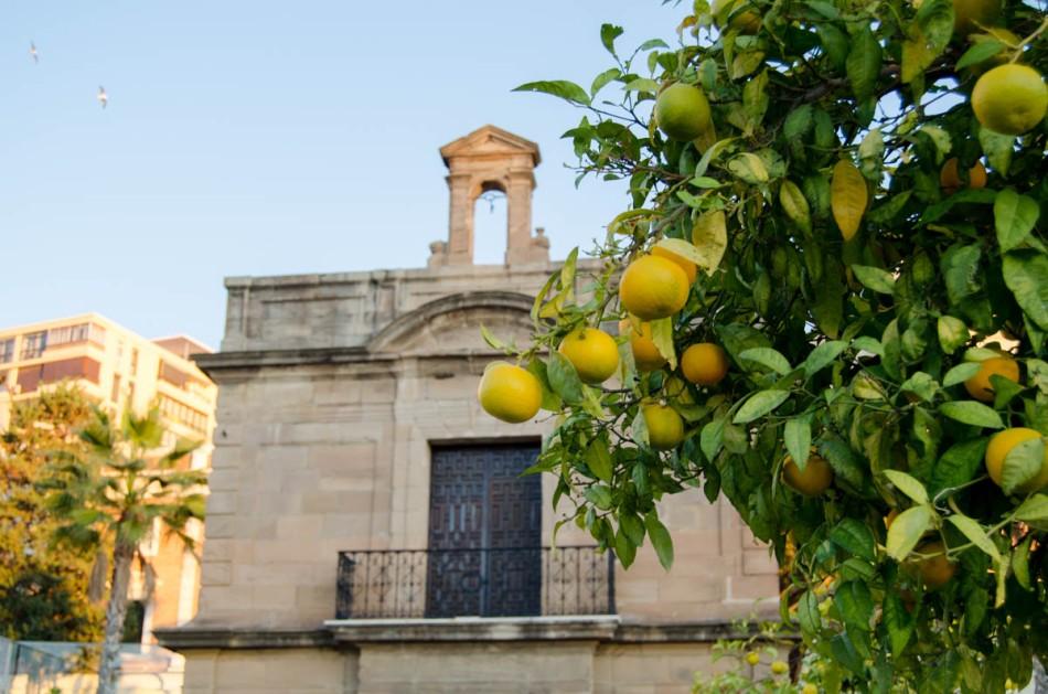 Rondreis Andalusië Malaga-23
